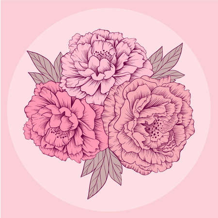 Hand drawn gentle pink vector peony flowers Ilustrace