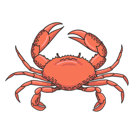 Hand drawn vector cartoon crab isolated on white background Ilustrace