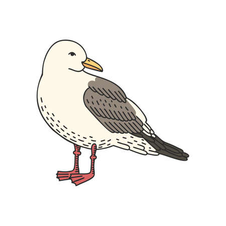 Hand drawn vector cartoon seagull isolated on white background
