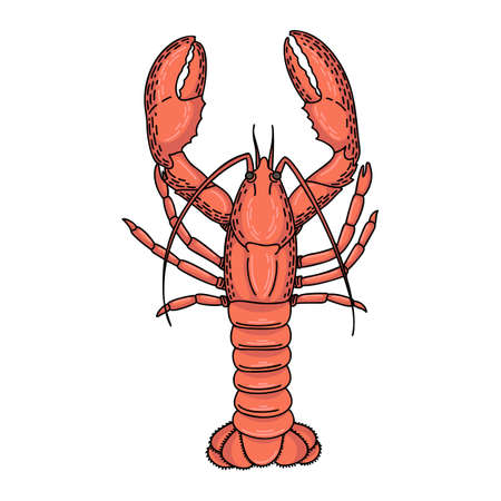 Hand drawn vector cartoon lobster isolated on white background Ilustrace