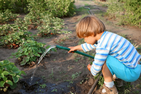 Little boy watering strawberries in the garden.