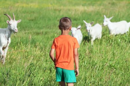 少年は緑の草原で遊んでヤギに似ています。 写真素材 - 43268790