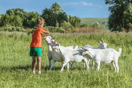 smiling goat: Boy to train young kids on  green meadow.