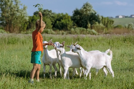 herdsman: Boy to train young kids on  green meadow.