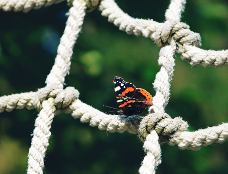 Red admiral butterfly sitting on a rope net