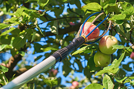 Fruit picking tool with an extension pole