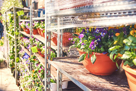 Viola tricolor in a ceramic pot with other flowers being sold in an outdoor shop Stock Photo