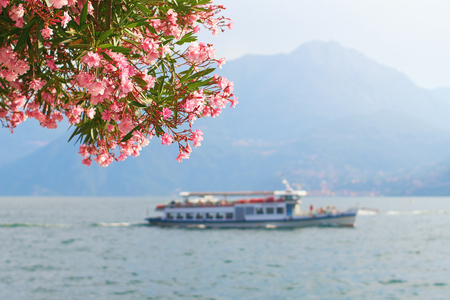 Beautiful summer view of a tourist ship sailing across the Bellagio town at lake Como in Italy with blooming nerium oleander flowers on foreground