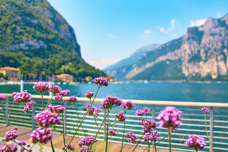 Violet flowers on steep alpine banks of beautiful lake Como with parked boats and yachts near village of Pare, Lombardy, Italy