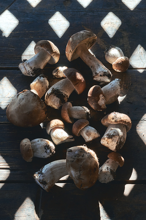 Cep, penny bun, porcino or boletus edulis mushrooms on teh wooden table with a shadow caused by wooden house window grid