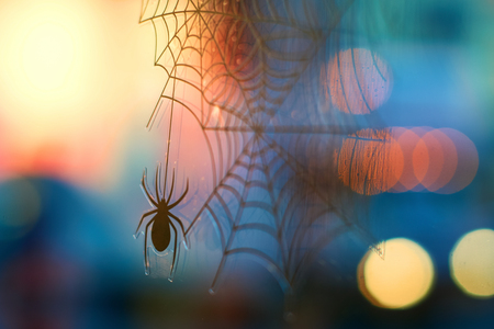 Halloween background with bokeh, spider and cobweb Stock Photo