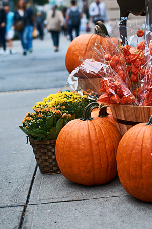 Halloween arrangement in front of the street shop in New York with orange pumpkins, physalis alkekengi or bladder cherry or Chinese lanterns, yellow mums and other decorations