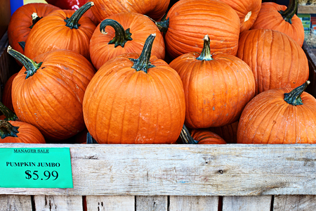 Halloween orange pumpkins on a manager sale in a street store with a price tag or label with USA dollar sign