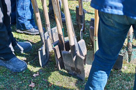 Team of workers ready to start planting trees with their shovels, teamwork concept