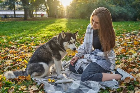 Young beautiful girl playing with her cute husky dog pet in autumn park covered with red and yellow fallen leaves Stok Fotoğraf - 131771527