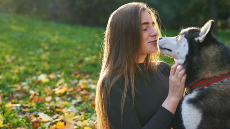 Young beautiful girl playing with her cute husky dog pet in autumn park covered with red and yellow fallen leaves Stok Fotoğraf - 131771584