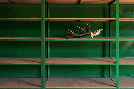 Deer skull with horns on the empty shelf in the warehouse. As the last available item it is a symbol or concept of economic crisis.