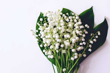 Lilies of the valley on white background 免版税图像