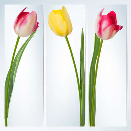 Set of banners with colorful flower   Vector