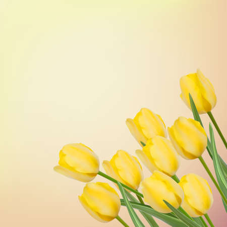 Spring background with beautiful tulips  Vector