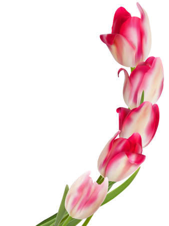Beautiful flower on a white background  Illustration