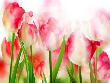 tulipe rouge: Tulipe rouge avec le bokeh
