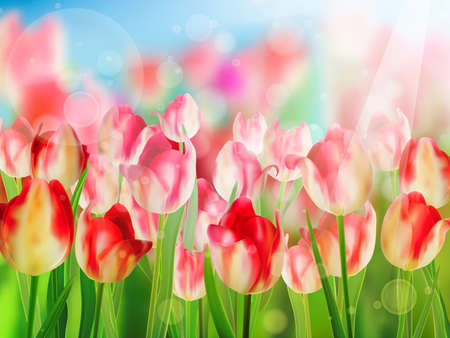 tulipe rouge: Tulipe rouge avec le bokeh EPS 10 Illustration