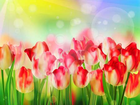 tulipe rouge: Tulipe rouge bokeh mod�le EPS 10