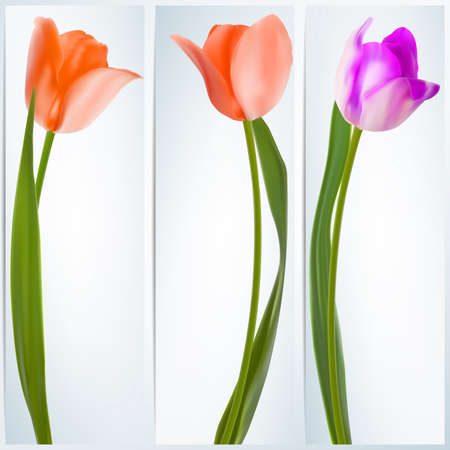 Set of banners with colorful flower  EPS 10 Vector