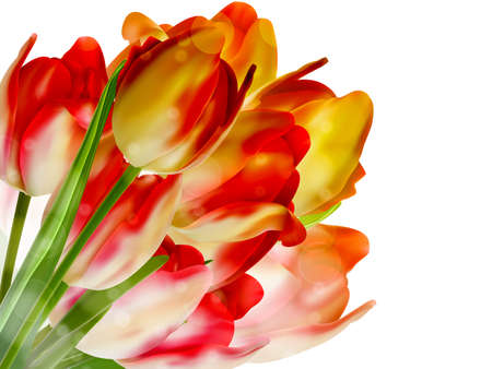 Tulips over white with copyspace  EPS 10 Vector
