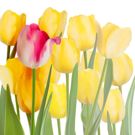 Bunch of tulips isolated on white background. And also includes  Vector
