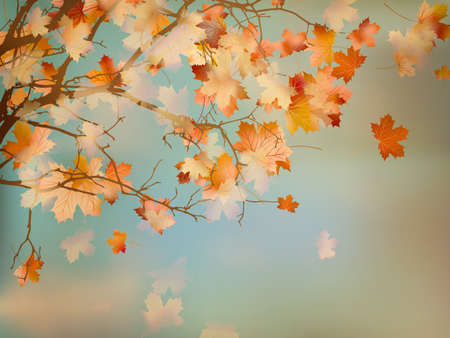 Happy Thanksgiving Day background with beautiful autumn maple leaves. And also includes EPS 10 vector Stock Photo