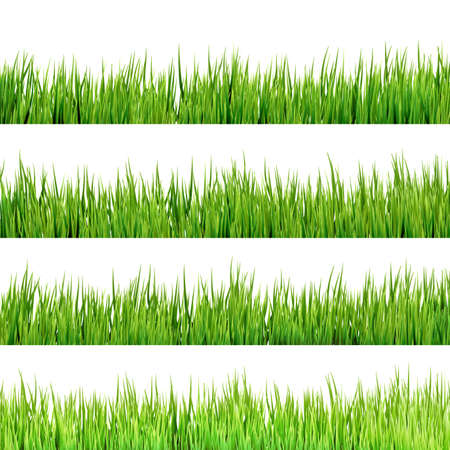 grass texture: Grass isolated on white.