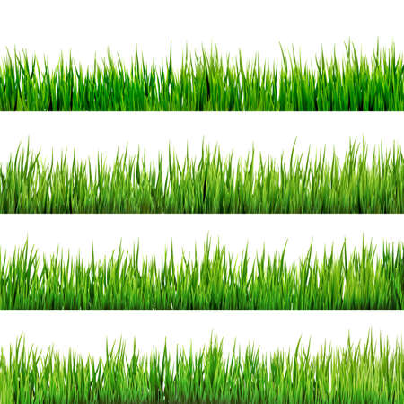 grass: Grass isolated on white.  Illustration