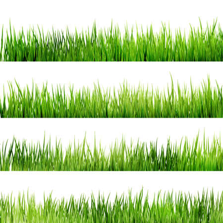 Fresh spring green grass Isolated On White. And also includes EPS 10 vector Vettoriali