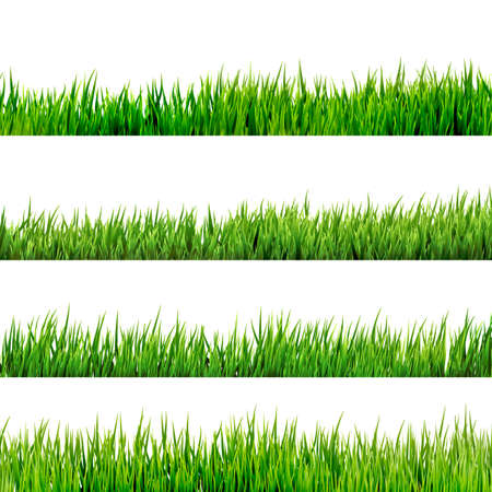 blades of grass: Grass isolated on white  Illustration