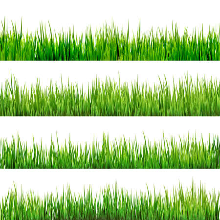 Grass isolated on white  向量圖像