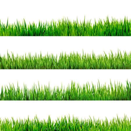 Gras geïsoleerd op wit