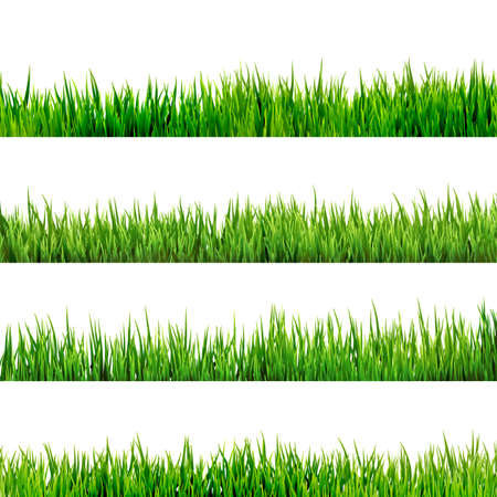 grass blades: Grass isolated on white   Illustration