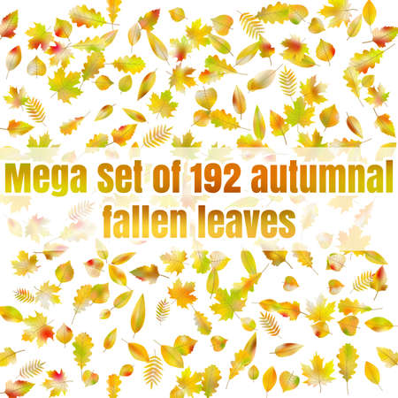 Mega Set of 192 autumnal fallen leaves. EPS 10 vector