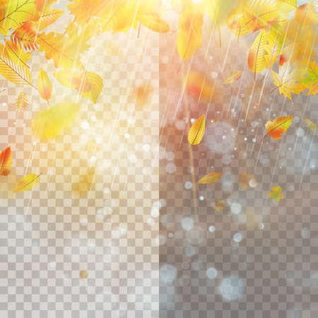Blätter und helles Sonnenlicht. Standard-Bild - 85568328