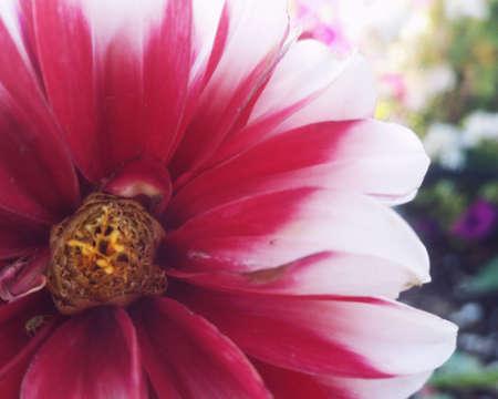 Red flower bud Stock Photo