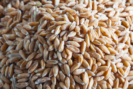 dinkel wheat heap, macro background Banco de Imagens