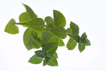 Fresh peppermint isolated on a white background Stok Fotoğraf