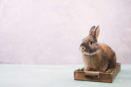 Easter Rabbit sitting in a basket with hay and colored eggs, empty copy spcae for text