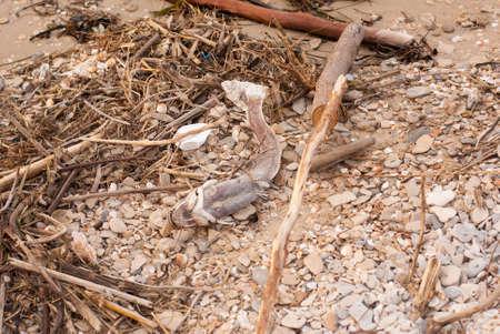 Filthy beach on the Mediterranean Sea in Israel, plastic bottles, stroller, dead fish, enviromental disaster Stockfoto