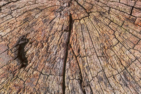 Ancient weathered tree trunk cross section detail photo