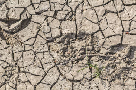 Photograph of animal footprints on desolate, barren, dry cracked soil  photo