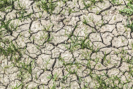 Photograph of desolate barren dry cracked soil with scattered patches of grass  photo