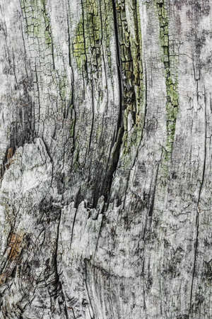 Photograph of old, weathered, cracked wooden cross-tie surface texture - detail  photo